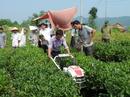 Tp. Hà Nội: Máy làm đất đa năng trâu vàng giá tốt nhất tại Hà Nội RSCL1269793