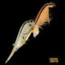 Tp. Hà Nội: Bộ sinh vật tiền sử Sea Dragon tại Sản Phẩm Sáng Tạo 244 Kim Mã Hà Nội CL1218668
