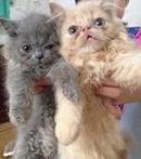 Tp. Hà Nội: Khám chữa bệnh cho chó mèo Hà Nội CL1701638P11