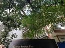 Tp. Hà Nội: cho thuê nhà mặt phố trần duy hưng tiện làm nhà hàng, văn phòng CL1685514P7