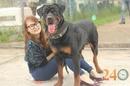 Tp. Hồ Chí Minh: Bán Chó Rottweiler hcm CL1599286