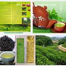 Tp. Hồ Chí Minh: Bán trà Tân Cương giá gốc - Chất lượng vàuy tín 100%, ngon CL1589073