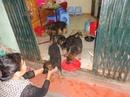 Tp. Hà Nội: ban cho becgie con 2 thang tuoi CL1599286