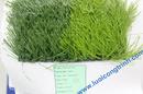 Tp. Hà Nội: Cỏ nhân tạo sân bóng CL1690994P19