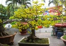 Tp. Hồ Chí Minh: Kỹ thuật bứng cây cảnh đúng cách CL1614112