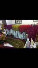 Tp. Hà Nội: Bán hoa tầm xuân giá rẻ nhất CL1614112