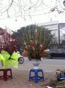 Tp. Hồ Chí Minh: Chuyên sỉ, lẻ nụ tầm xuân hàng đẹp giá rẻ CL1614112