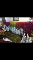 Tp. Hồ Chí Minh: bán nụ tầm xuân, bông lau, giá rẻ CL1614112