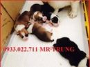 Tp. Hồ Chí Minh: Chuyên Phối Giống Và Kinh Doanh Corgi CL1701835P6