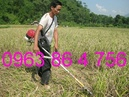 Tp. Hà Nội: Điện máy Hoàng Long đồng loại hạ giá máy cắt cỏ honda CL1619444