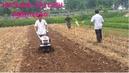 Tp. Hà Nội: Máy xới đất mini đa năng trâu vàng 1WG4 giá rẻ nhất hiện nay CL1650630P6