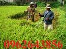 Tp. Hà Nội: Địa chỉ mua máy cắt lúa cầm tay Honda GX35 tin cậy nhất CL1648512P2