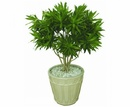 Tp. Hà Nội: Áp dụng mô hình trồng cây cảnh trong nhà mang lại sức khỏe cao CL1689010P5