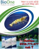 Cà Mau: Men vi sinh xử lý nước ao nuôi tôm CL1658043P5