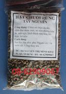 Tp. Hồ Chí Minh: Bán Chuối Hột Rừng, tốt Nhất- Dùng Chữa tê thấp, nhức mỏ, Tán sỏi, lợi tiểu CL1649059