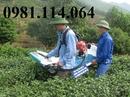 Tp. Hà Nội: mua máy hái chè ở đâu tốt nhất miền bắc CL1693468P4