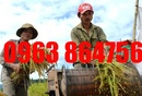Tp. Hà Nội: Giá thật tuyệt cho máy tuốt lúa mini 170 mạnh mẽ CL1655445