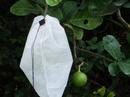 Tp. Hồ Chí Minh: ***** Túi bao bái bưởi phòng trừ sâu dục trái CL1657047