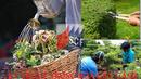 Tp. Hà Nội: Học cấp chứng chỉ Trồng hoa cây cảnh CL1667510
