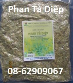 Bán Phan Tả Diệp- Sử dụng giúp chống táo bón, nhuận tràng, giá rẻ