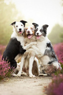 Tp. Hà Nội: Tiêm phòng vacxin cho chó mèo tại nhà CL1691005