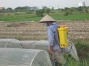 Tp. Hà Nội: Giá các loại bình phun thuốc xịt điện chính hãng CL1680088P5
