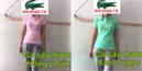 Tp. Hồ Chí Minh: Phân phối sỉ lẻ áo cá sấu CL1673220