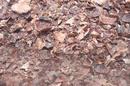 Tp. Hồ Chí Minh: vỏ lụa hạt điều CL1672960P5