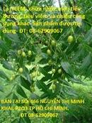 Tp. Hồ Chí Minh: Bán Trà Lá NEEM, Ấn độ- Dùng Chữa tiểu đường, nhức mỏi và tiêu viêm tốt- giá rẻ CL1673209P2