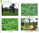 Tp. Hồ Chí Minh: Cỏ lá gừng, cỏ nhung nhật, cung cấp cây xanh, cây công trình, thi công cảnh quan CL1007507