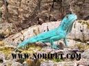 Tp. Đà Nẵng: Bán Iguana - Rồng Nam Mỹ CL1702831