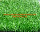 Tp. Hồ Chí Minh: Cỏ sân vườn TT-SVG325 CL1674698