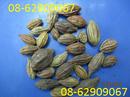 Tp. Hồ Chí Minh: Bán Sản phẩm Chữa khản tiềng, viêm họng thật tốt- Quả KHA TỬ CL1677695P7