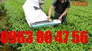 Tp. Hà Nội: Thông số kỹ thuật Động cơ máy Hái chè CL1690195P8