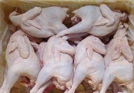 Ở đâu bán thịt gà đông lạnh