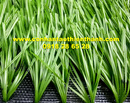 Tp. Hồ Chí Minh: Cỏ sân bóng tt-sbqs50 CL1684496P6