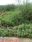 Tp. Hồ Chí Minh: Bán đất phường Tăng Nhơn Phú B, quận 9, 1. 4 tỷ. RSCL1148538