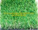 Tp. Hồ Chí Minh: Cỏ sân vườn TT-SVZ425 CL1684572