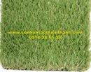 Tp. Hồ Chí Minh: Cỏ sân vườn TT-SVG425 CL1684447