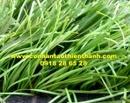 Tp. Hồ Chí Minh: Cỏ sân bóng TT-SBT50 CL1684572