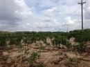 Bình Thuận: Bán mỏ cát xây dựng DT 80 ha có giấy phép khai thác. CL1691518
