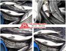Tp. Hồ Chí Minh: Cung cấp cá bóp biển tại tphcm CL1700100