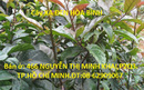 Tp. Hồ Chí Minh: Bán Sản phẩm Phòng, chữa bệnh ung thư- hiệu quả tốt-Cây XẠ ĐEn CL1687603P10