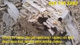 Diệt mối Hà Nội 0983224779
