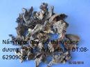 Tp. Hồ Chí Minh: Bán Nấm Ngọc CẨU, loại quý- Giúp Tăng sinh lý, tráng dương, bổ thận- giá rẻ CL1693261