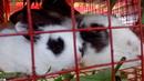 Tp. Hồ Chí Minh: Thỏ con CL1702831