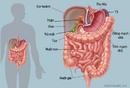 Tp. Hồ Chí Minh: Thuốc lá gây hại cho dạ dày và sức khỏe CL1697319P4
