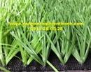 Tp. Hồ Chí Minh: Cỏ sân bóng tt-sbc8t CL1684439