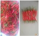 Tp. Hồ Chí Minh: Cung Cấp Các Loại ớt Trái, ớt Hiểm CL1697066