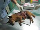 Tp. Hà Nội: chó nôn, bỏ ăn, đi ngoài ra máu phải làm sao CL1701507